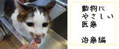 動物にやさしい医療 治療
